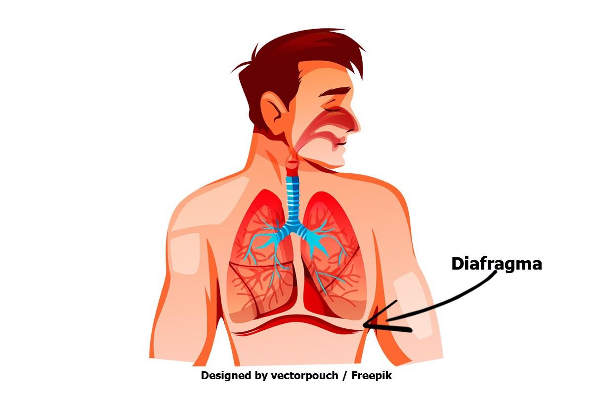 Hipopresivos aplicados al ciclismo: Diafragma
