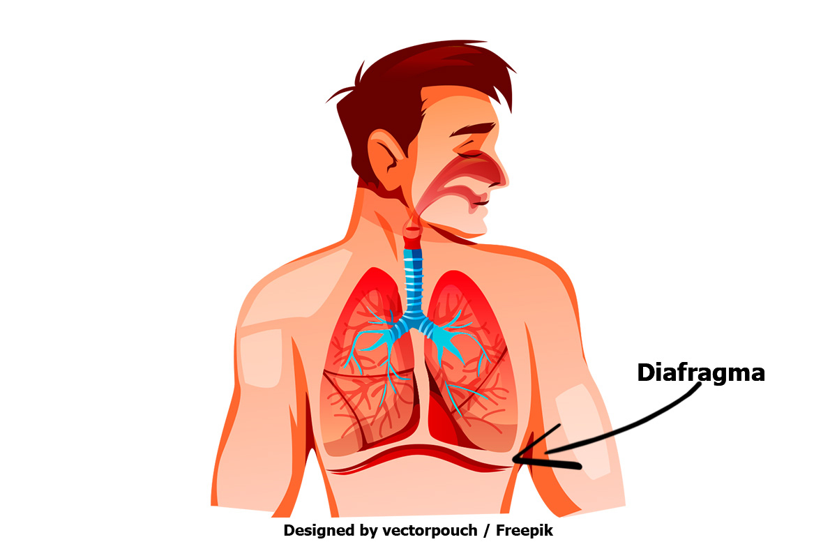 Mejorar nuestra respiración: el diafragma