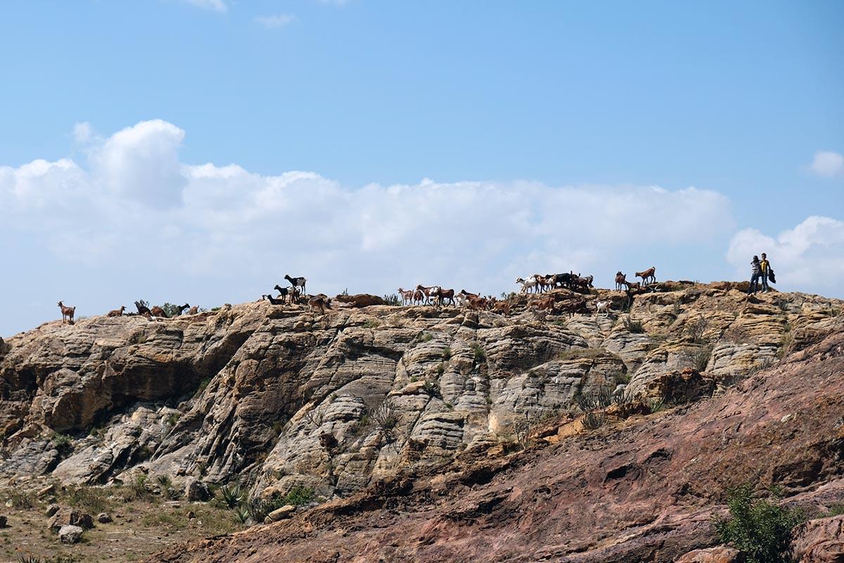 Niños pastoreando cabras en los alrededores de Wukro