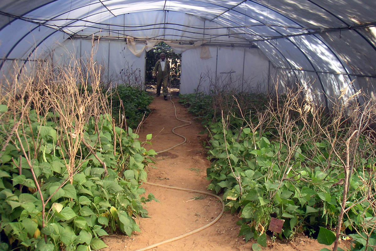 Ayudas al cultivo en Wukro
