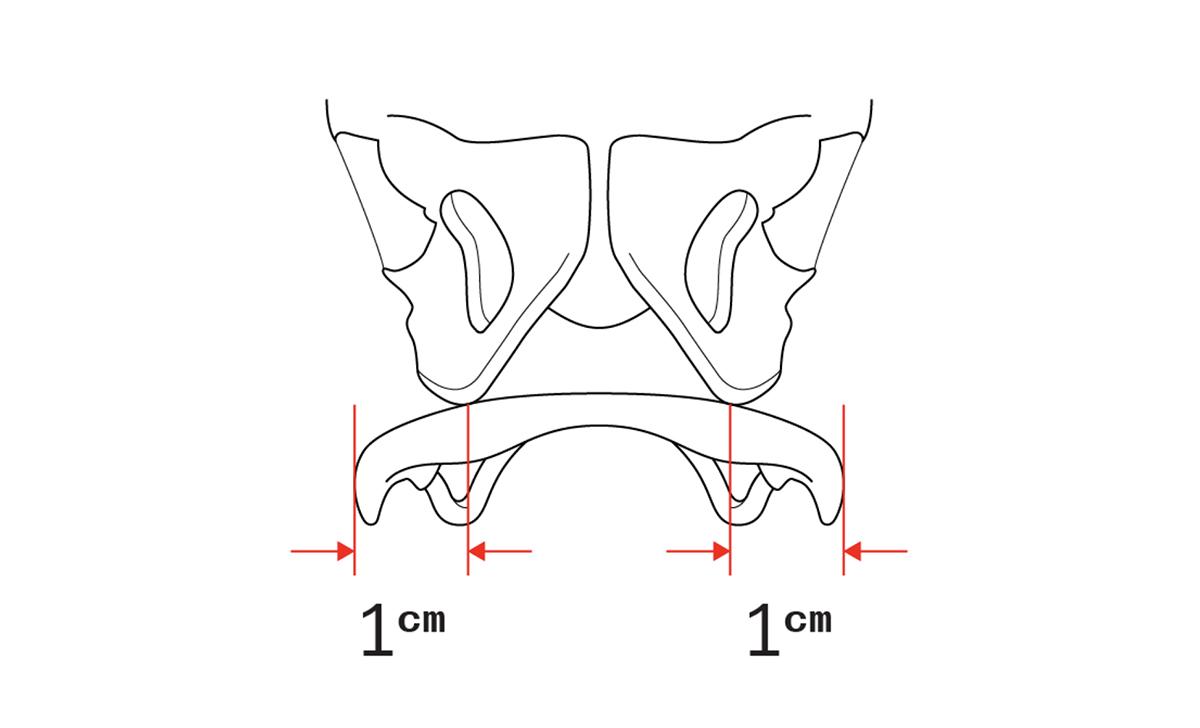 Gráfica de la anchura ideal de los sillines según el apoyo
